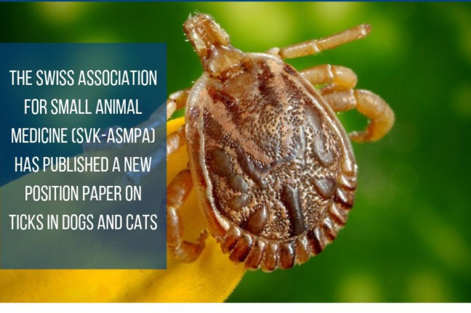 New SVK-ASMPA Position paper on ticks in dogs and cats