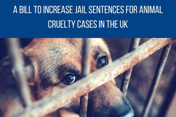 A bill to increase jail sentences for animal cruelty cases in the UK