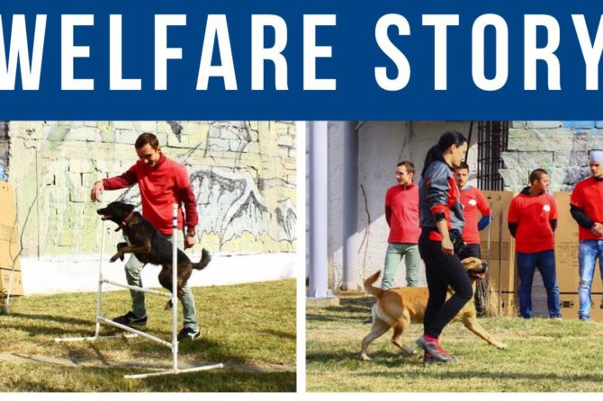 Romanian Prison Dogs Program