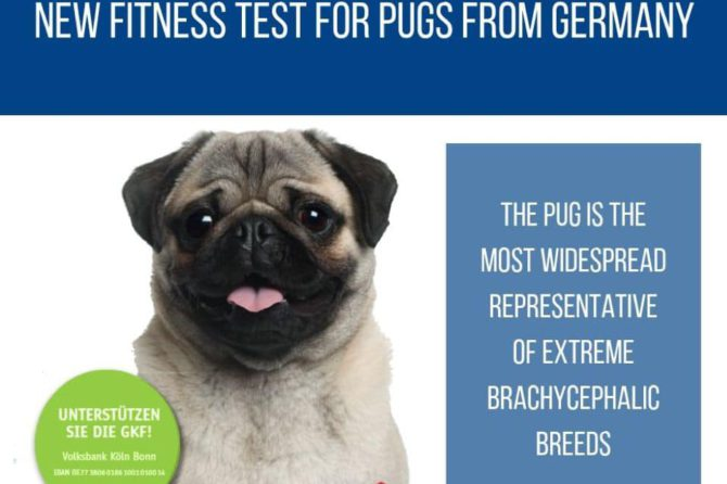 New fitness test for pugs from Germany