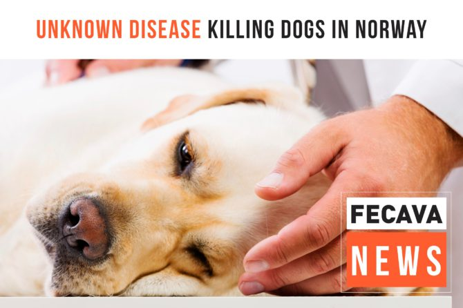 Unknown Disease Killing Dogs in Norway