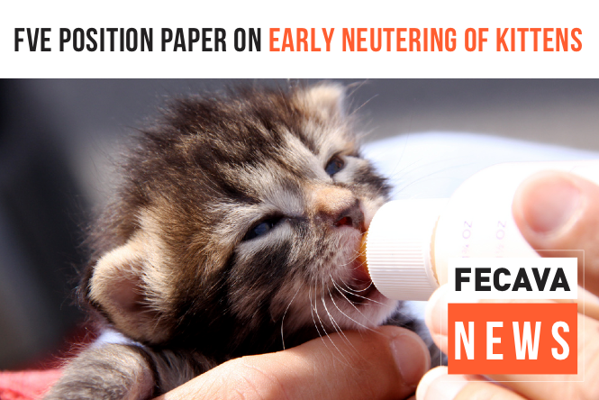 FVE Position Paper on Early Neutering of Kittens