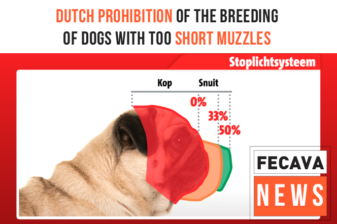 Dutch prohibition of the breeding of dogs with too short muzzles