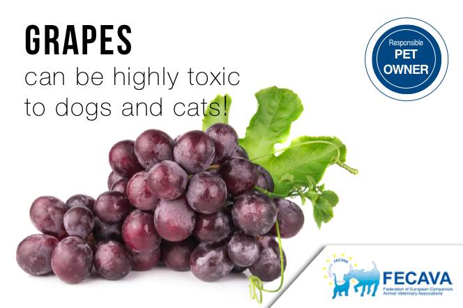 Grapes can be highly toxic to dogs and cats!