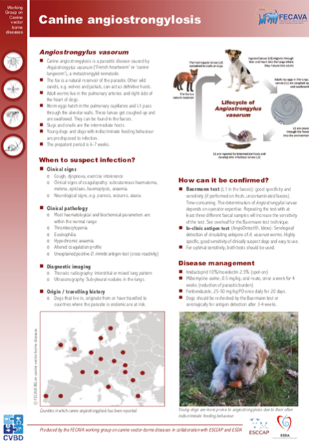 Canine angiostrongylosis