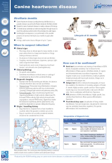 Canine heartworm disease