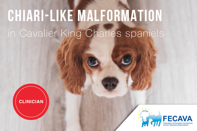 Chiari-like malformation and Syringomyelia