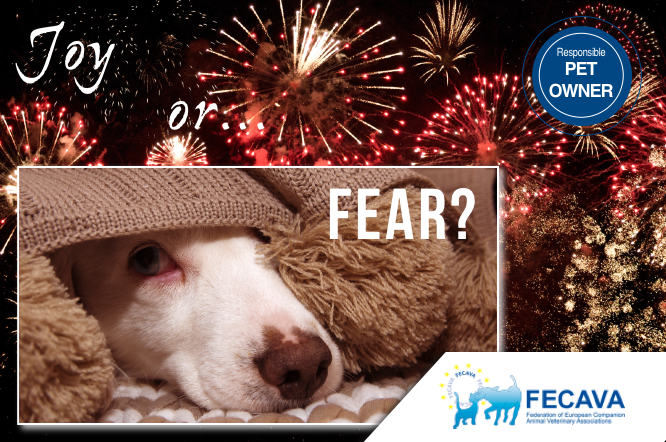 Advise for pet owners on measures to keep their pets safe during fireworks season