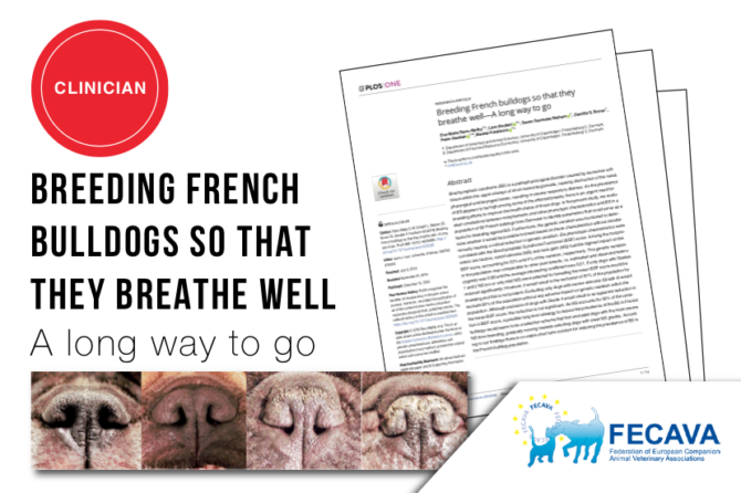 Breeding French bulldogs so that they breathe well — A long way to go