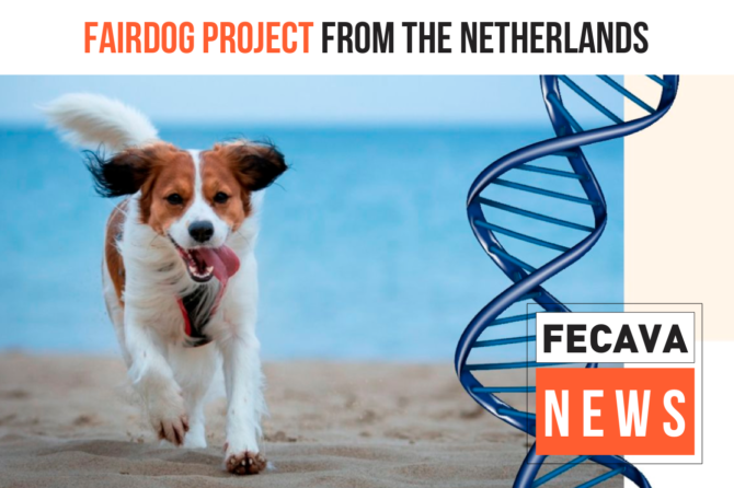FairDog Project from the Netherlands