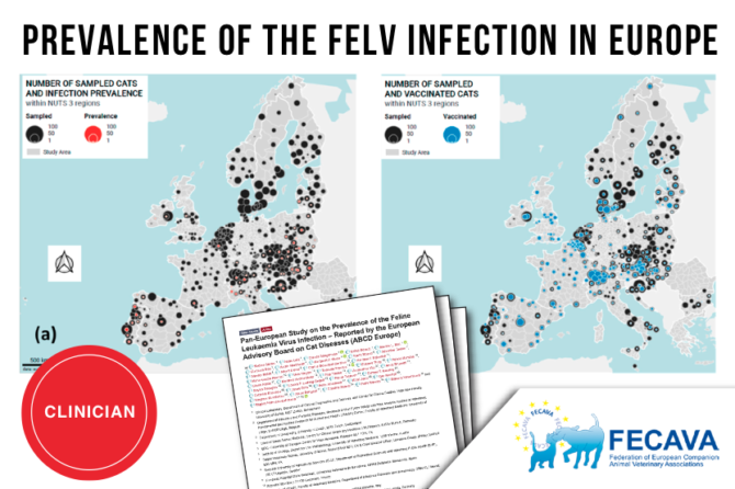 The update on Feline Leukaemia Virus (FeLV) Infections