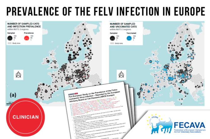 The update on Feline Leukaemia Virus (FeLV) Infections