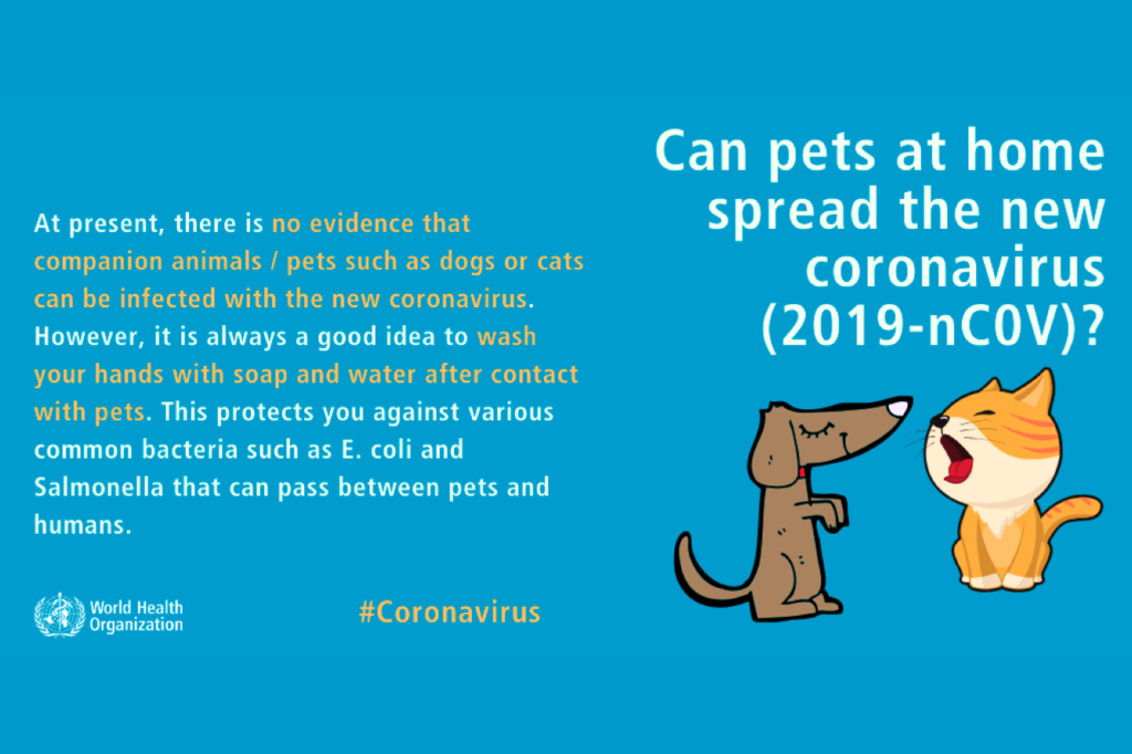 can pets at home spread the new coronavirus  2019