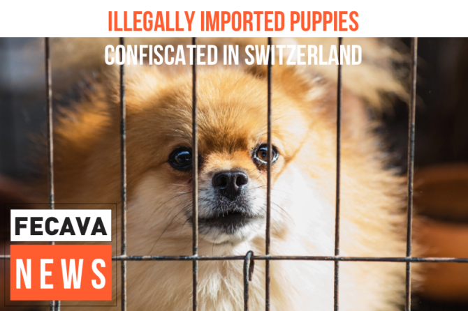 Five dogs imported from Romania confiscated in Switzerland