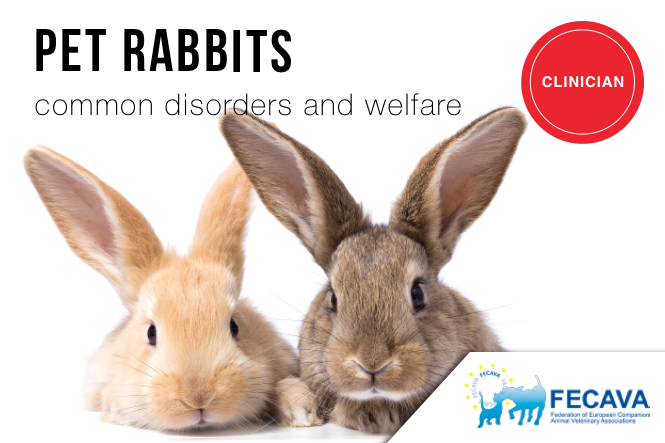 Morbidity and Mortality of Domestic Rabbits