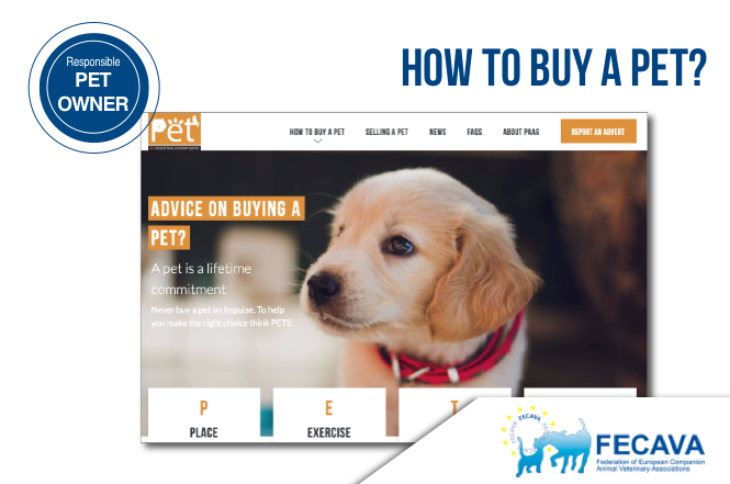 How to buy a pet?