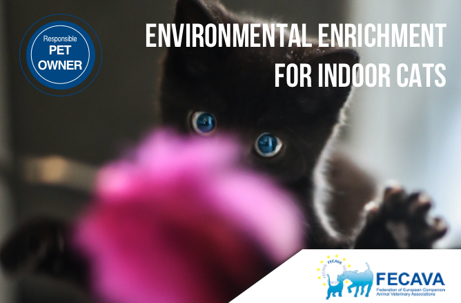 Environmental Enrichment for Indoor Cats