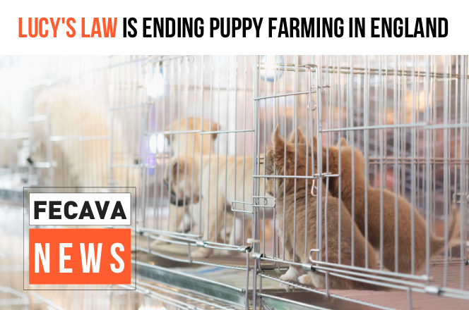Lucy's Law: The beginning of the end for puppy farming in England