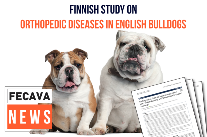 Radiographic findings have an association with weight-bearing and locomotion in English bulldogs
