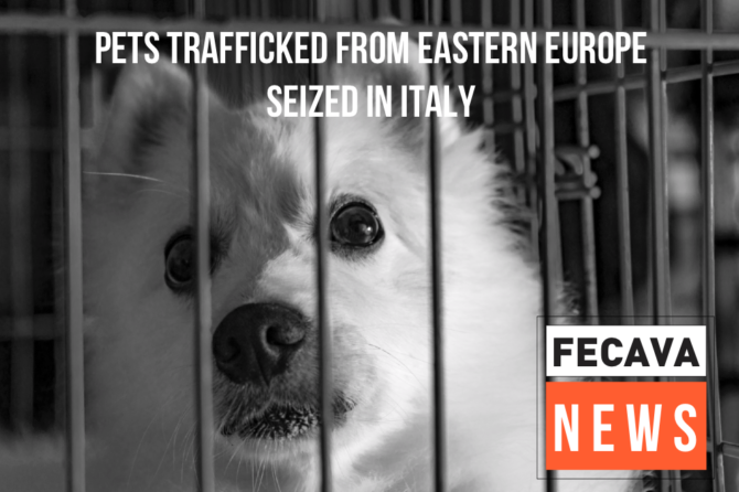 Pets trafficked from Eastern Europe seized in Italy
