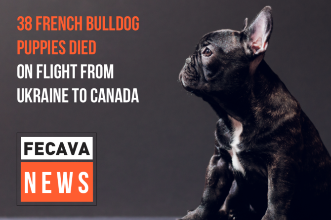 38 French Bulldog puppies died on flight from Ukraine to Canada