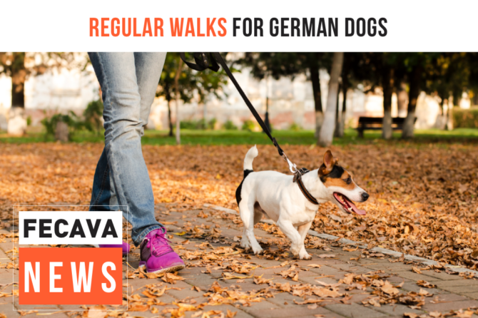 Regular walks for German dogs demanded by law