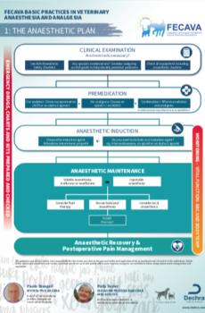 Anesthetic Plan Flowchart