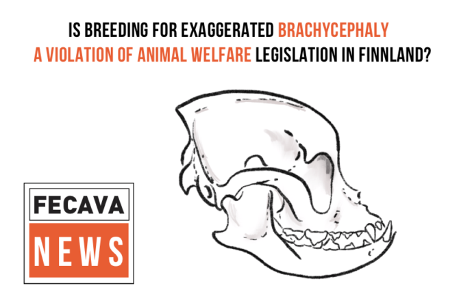 Is Breeding for Exaggerated Brachycephaly Violation of Animal Welfare Legislation in Finland?