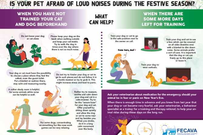 Is your pet afraid of loud noises during the festive season?