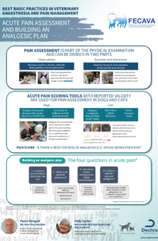 Acute Pain Assessment and Building an Analgesic Plan Flowchart