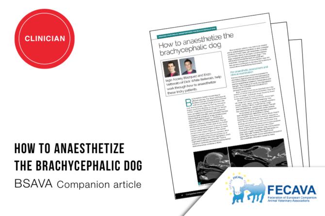 BSAVA Companion article 'How to anesthetize the brachycephalic dog'