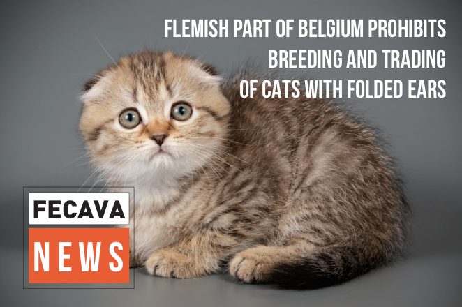 Flemish part of Belgium bans breeding and trading of cats with folded ears