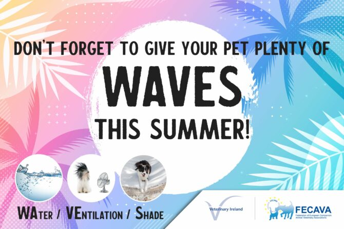 Don't Forget to Give your Pet plenty of WAVES this Summer!